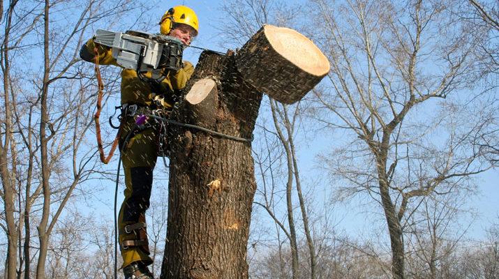 зрізання-дерев