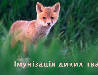 Імунізація диких тварин