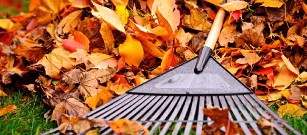Спалювання листя – ризик для здоров'я
