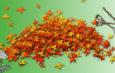 Визначено місця для складання опалого листя